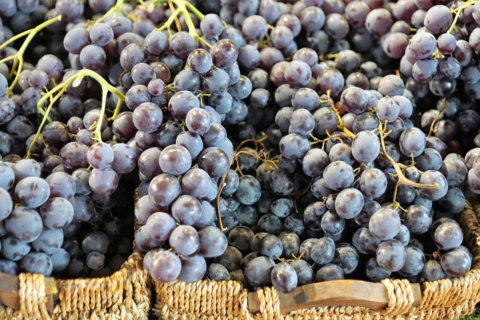grapes-2974284_960_720
