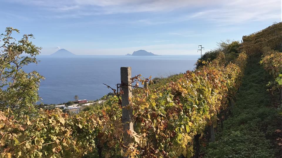Salina: la viticoltura eroica della famigliaColosi