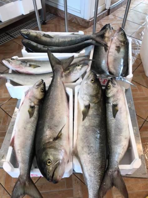 pesci serra il grottino
