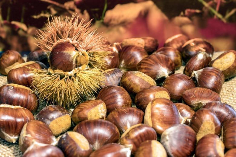 wild-chestnuts-4542281_960_720