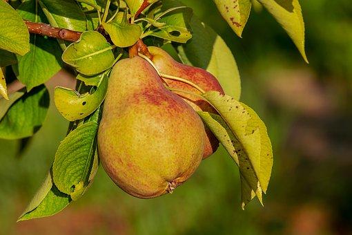 La pera comedessert…