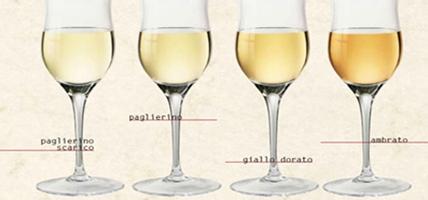 sfumature-dei-vini-bianchi